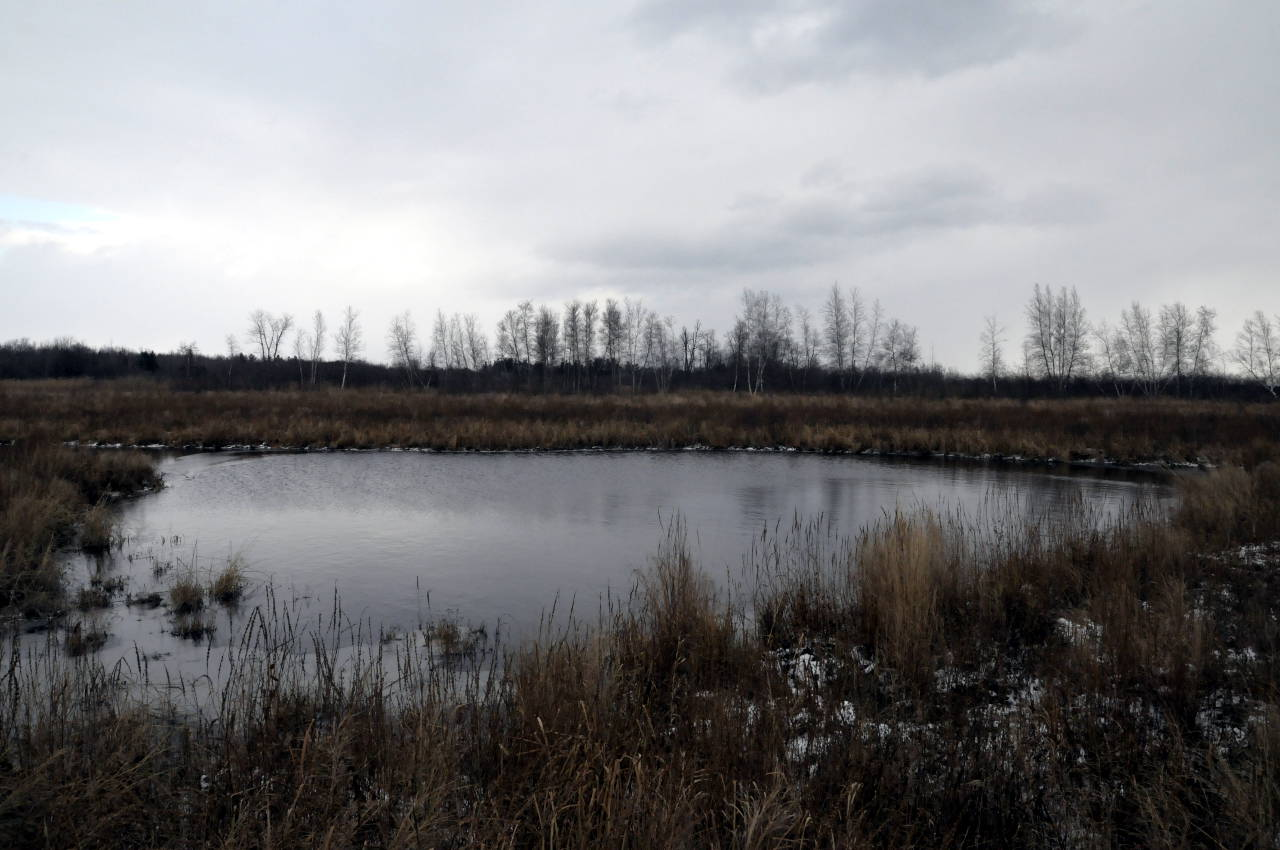 Three interconnected ponds, like this one at the east end of Cooper Marsh, will be constructed in the winter of 2015-16 at the south end of the marsh. (Cornwall Newswatch)