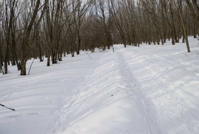 Snow blankets a cross-country skiing and hiking trail at the Two Creeks Conservation Area west of Morrisburg. (Photo/Phillip Blancher)