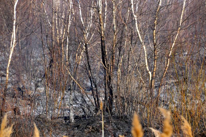 Ingleside Marsh Fire 09 Apr2915 Edited