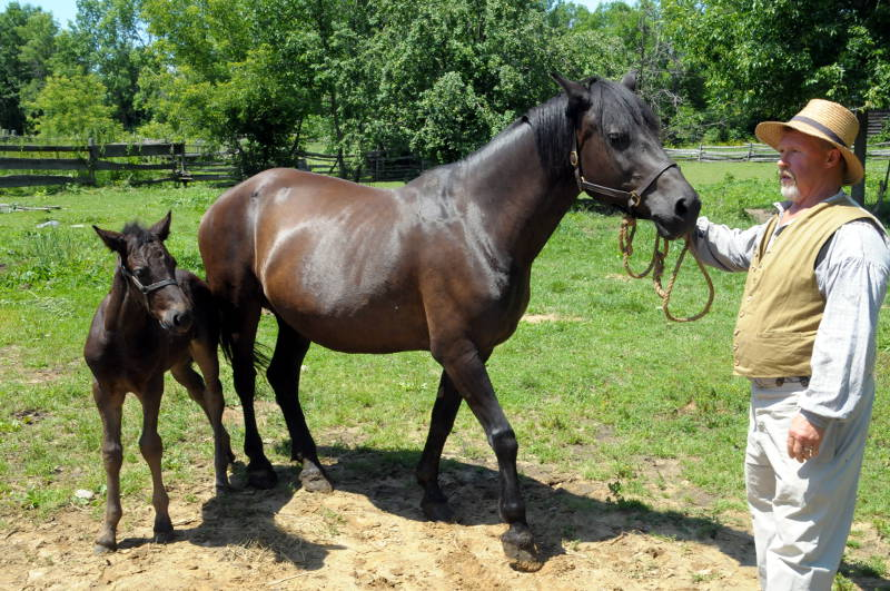 Name Foal UCV 05 Jul1615 Edited