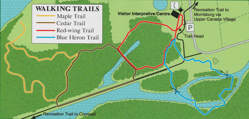 An outline of the walking trails at the Upper Canada Migratory Bird Sanctuary. The section of the Blue Heron Trail (between the two X's) has been closed due to trail degredation. MP Guy Lauzon announced $100,000 July 27, 2015 to fix another section of the Red Wing Trail, in red, and start a study on fixing up the Blue Heron Trail. (Photo/SLPC)