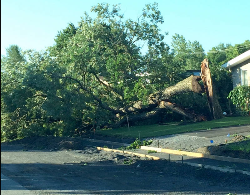 In this Saturday, July 23, 2016 supplied photo, a tree is snapped off near the base after an intense thunderstorm rolled through the area the night before. (Supplied via Newswatch Group)
