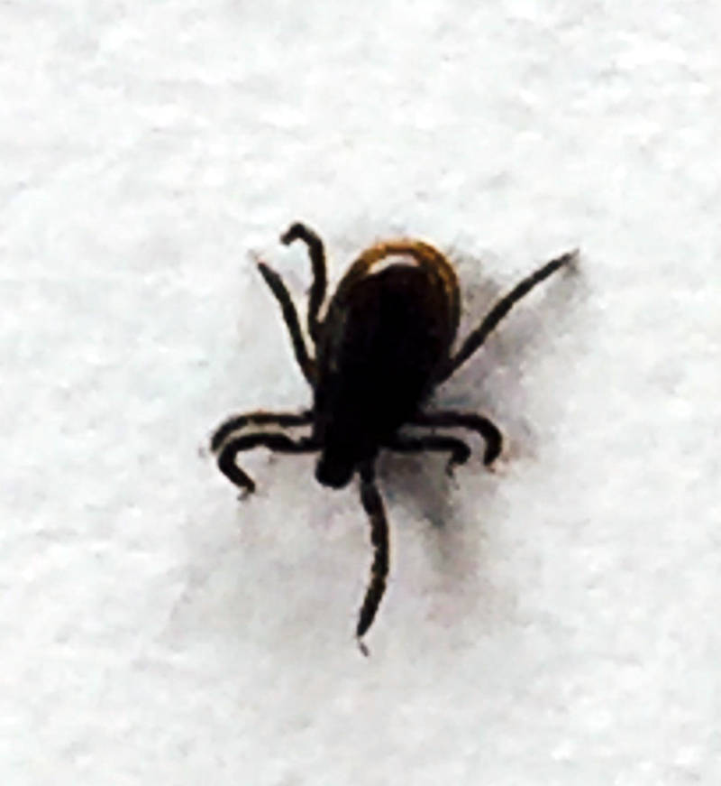 Tick Warning Apr2317 02 Edited
