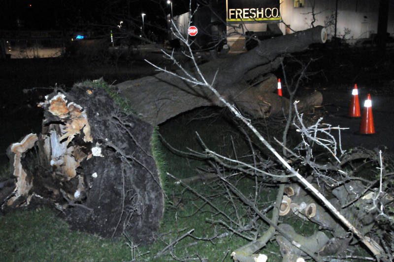 Pacific Avenue Tree Storm Damage May0518 01 Edited