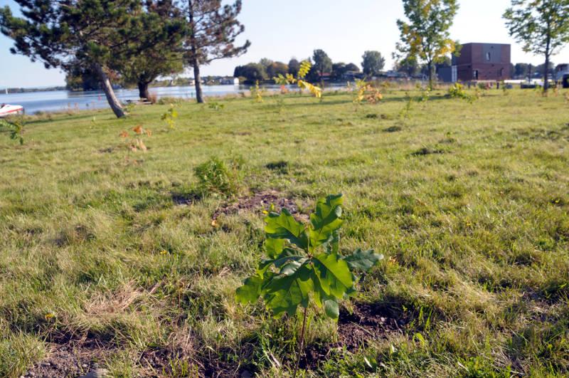 Tree Planting Error Boundary Road Sep2519 02 E